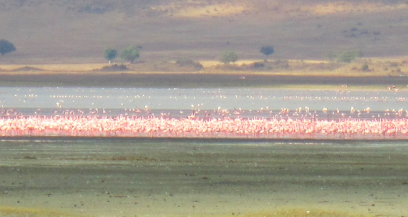 Flamingoes on the lake in the Ngorongoro Crater National Park
