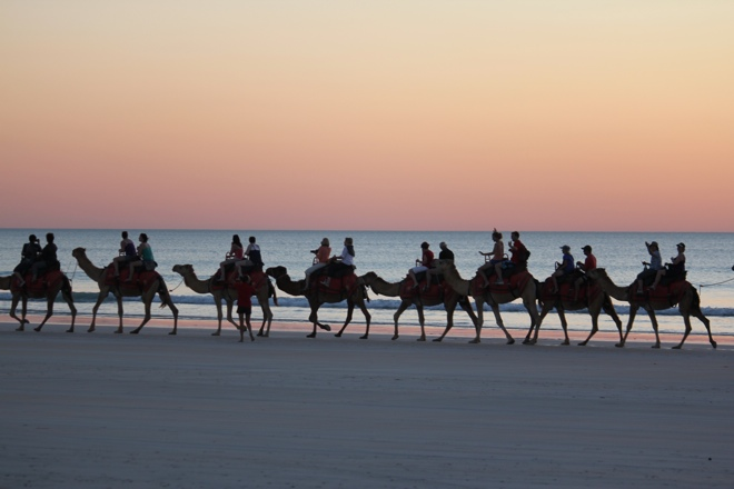The camels return home after sunset on Cable Beach, Broome