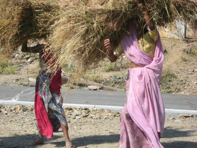 Sari clad girls carrying hay in Rajasthan