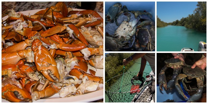 Mudcrabbing 1 Collage.jpg