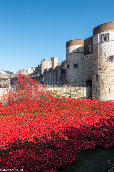 London's Remembrance Day Poppies