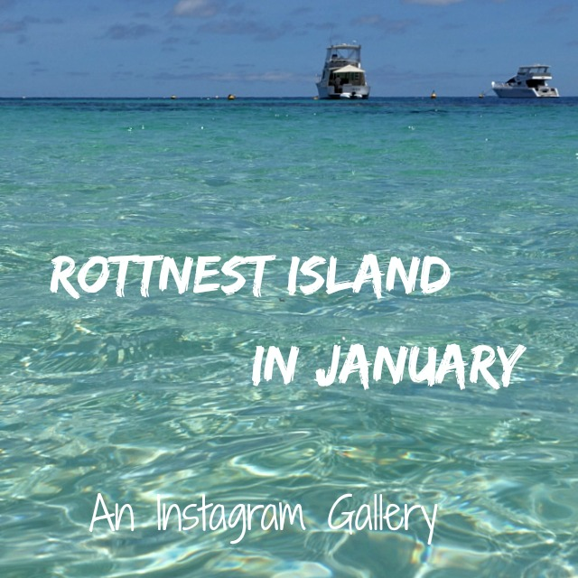 Rottnest Island in January: An Instagram Gallery